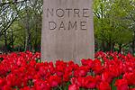 BJ 4.18.17 Tulips Scenic 2142.JPG by Barbara Johnston/University of Notre Dame