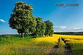 Marek, LANDSCAPES, LANDSCHAFTEN, PAISAJES, photos+++++,PLMP01000W,#L#, EVERYDAY