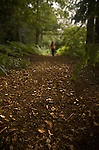 A young girl walking alone in woods with bracken and fallen leaves