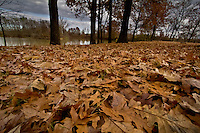 Fall at Cane Creek Park along the Arkansas River near Clarksville.