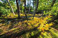 Late Summer beech gap—Critically Imperiled—At very high risk of extinction