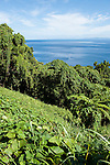 Taveuni, Fiji; dense vegetation along the road near the southern tip of the island