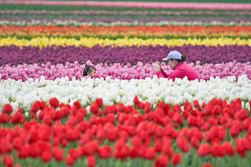 Child having picture taken  in tulip field. Tulip Town. Mt. Vernon. Washington