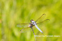 06618-00213 Yellow-sided Skimmer (Libellula flavida) male Montgomery Fen Ripley Co. MO