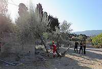 Pictured: Special forensics police officers fell a tree after to make space for a further search by a disused building in a field in Kos, Greece. Saturday 01 October 2016<br /> Re: Police teams led by South Yorkshire Police, searching for missing toddler Ben Needham on the Greek island of Kos have moved to a new area in the field they are searching.<br /> Ben, from Sheffield, was 21 months old when he disappeared on 24 July 1991 during a family holiday.<br /> Digging has begun at a new site after a fresh line of inquiry suggested he could have been crushed by a digger.