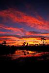 Sunrise Everglades national park