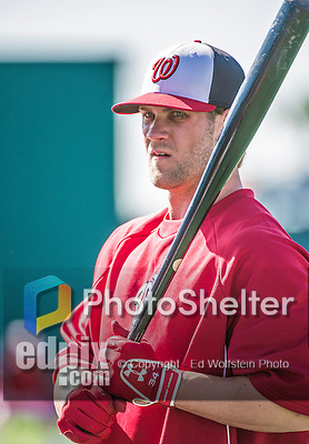 11 March 2014: Washington Nationals outfielder Bryce Harper awaits his turn in the batting cage prior to a Spring Training game against the New York Yankees at Space Coast Stadium in Viera, Florida. The Nationals defeated the Yankees 3-2 in Grapefruit League play. Mandatory Credit: Ed Wolfstein Photo *** RAW (NEF) Image File Available ***