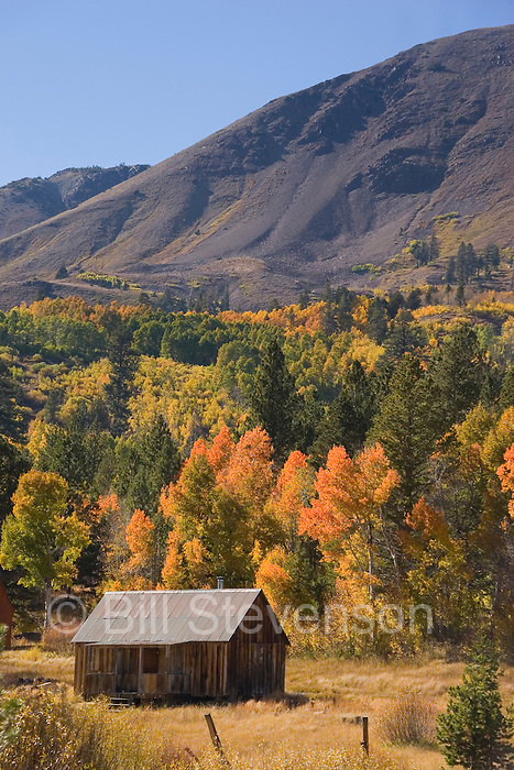 A picture of an old cabin and fall aspen trees in the Sierra Mountains in California