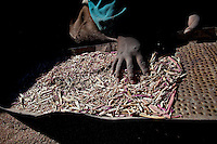 A picture dated September 11, 2011 shows the hand of a Chipaya woman cleaning her quinoa in Oruro, Bolivia.  2013  was declared the international year of Quinoa by the UN.  Bolivia is the main producer of quinoa in the world.