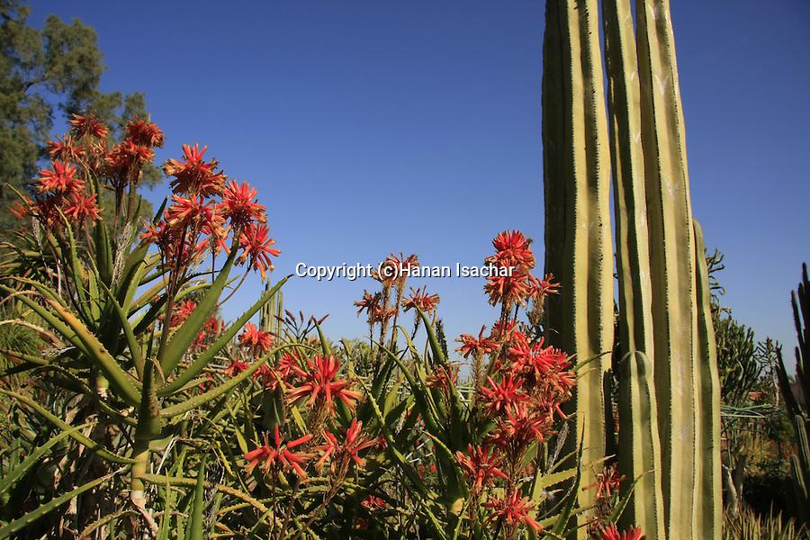 Israel, Northern Negev. The Cactus Garden in Kibbutz Saad
