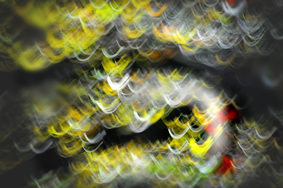 november 20, 2013 copyright JimMendenhallPhotos.com 2013. Pittsburgh, PA. Mt. Lebanon, leaves on a fruit tree blurred while exposing during a slow shutter speed as I walk.