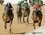 Delaware Oaks contenders-2013