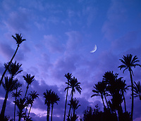 Palms Morocco<br />