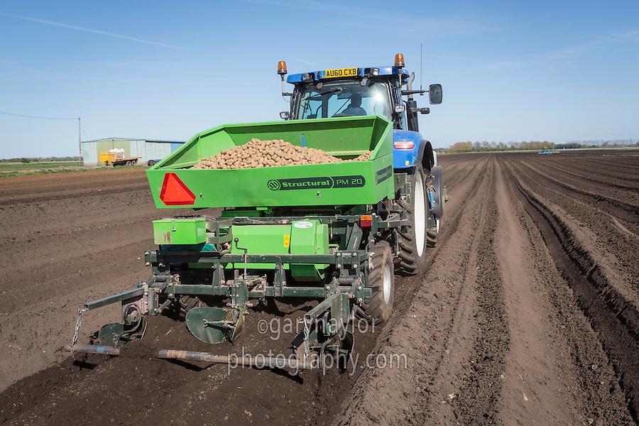 Planting Markies potatoes with a two row Miedema Structural planter- Suffolk, April