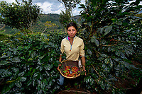 Guadalupe, Coffee Farmer, Matagalpa, Nicaragua, 2012<br />