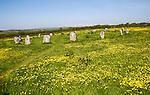 The Merry Maidens prehistoric stone circle,, Cornwall, England, UK