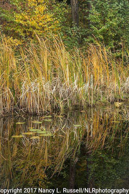 Golden grasses reflecting onto Dawson Lake in North Idaho
