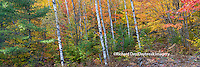 64776-011.09 Fall Color Hiawatha National Forest  Alger county in the Upper Peninsula, MI