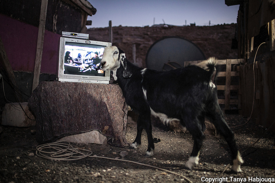 A majority of the Bedu communities  do not have access to the electricity network and only half are connected to the water network. They make due with expensive generators and night time is devoted to news and turkish soap operas.