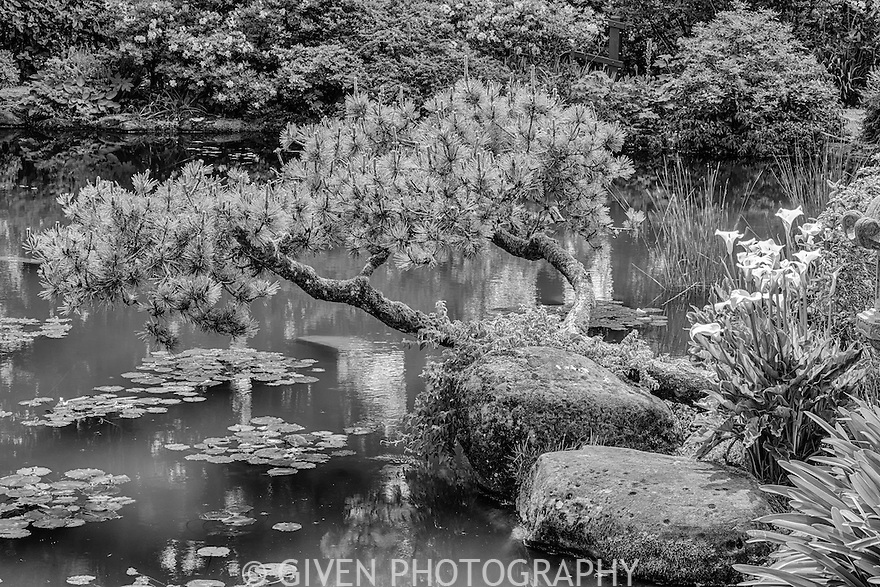 Japanese Garden, Shore Acres State Park, Oregon