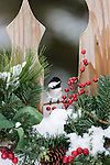 Black-capped chickadee perched on a festive backyard fence in the wintertime