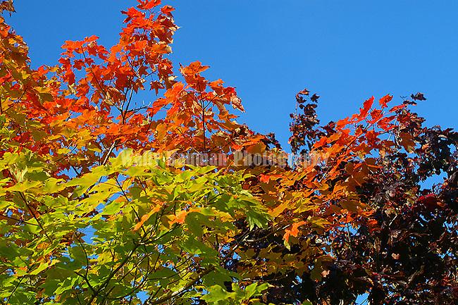 Images of The Canadian Maritime Provinces of Nova Scotia and Prince Edward Island. Fall colours.  Autumn splendor.