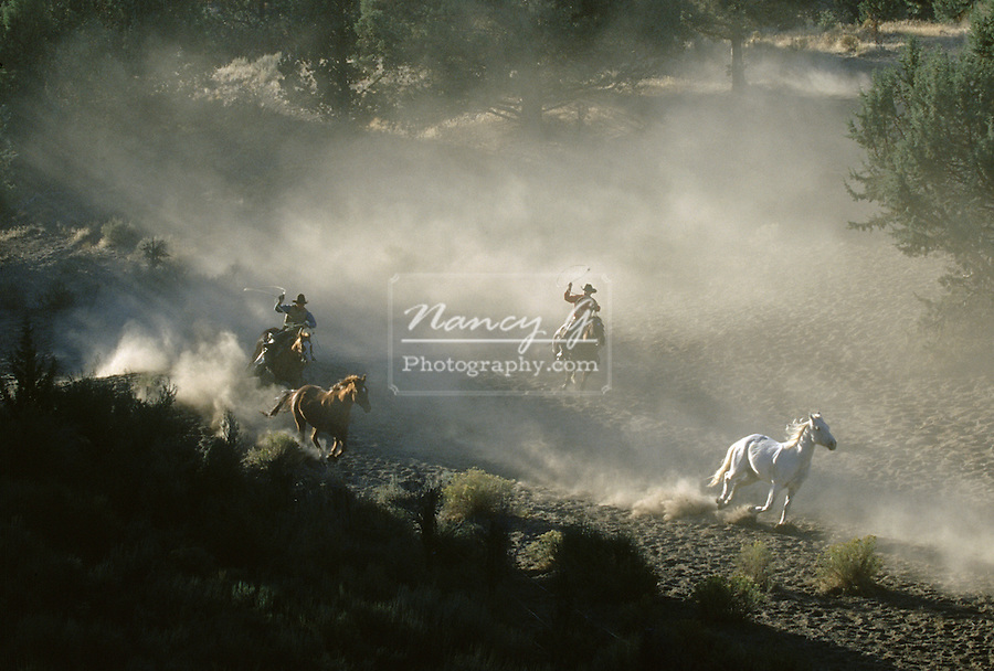 cowboys and horses running in Oregon