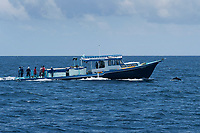 Maldivian Tuna Fishing Boat with Pantropical Spotted Dolphin, Stenella attenuata, porpoising in front of it, Maldives, Indian Ocean