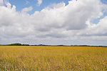 A endless field of sawgrass prairie is what makes up part of the Everglades ecosystem.