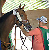 Cabo Cat before The Kent Stakes (gr 3) at Delaware Park on 9/20/14