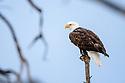 Yellowstone in Winter: Birds