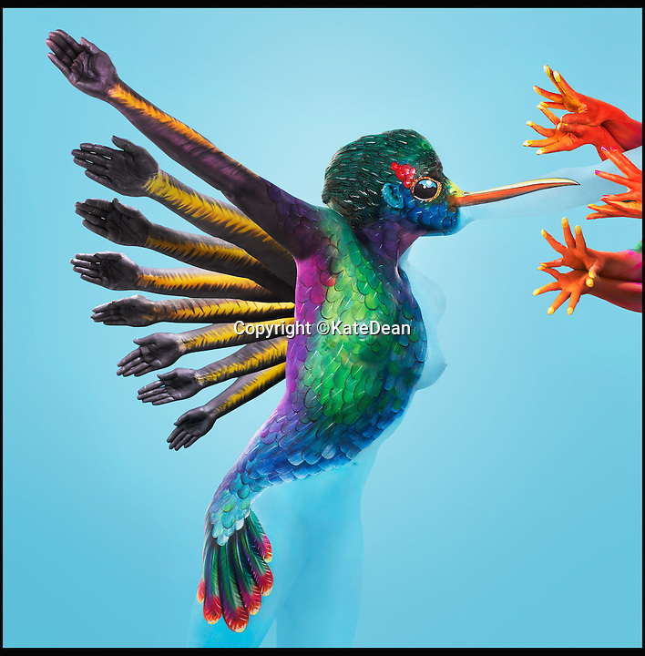 BNPS.co.uk (01202 558833)<br /> Pic: KateDean/BNPS<br /> <br /> ***Please Use Full Byline***<br /> <br /> The hummingbird represent the intimacy of a relationship.<br /> <br /> A hummingbird flutters in front of a flower to drink its nectar - or so it might seem. <br /> <br /> But look closer, and you discover the picture is in fact an incredible illusion made up of 12 painted models.<br /> <br /> The image is part of stunning set created by expert body painter Kate 'Spinks' Dean, from Bristol, in which naked women are transformed into birds using nothing but a lick of paint and clever photography.<br /> <br /> The collection, called Life in Flight, tells the story of human life through birds, from finding a partner and settling down to having children then watching them grow up and leave.hummingbird and the lovebirds perched on a branch represent the intimacy of a relationship.