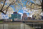 Dayton Ohio skyline view with Main St. Bridge through spring blossoms.