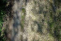 cobbles of the Bois de Wallers-Arenberg<br /> <br /> 2014 Paris-Roubaix reconnaissance
