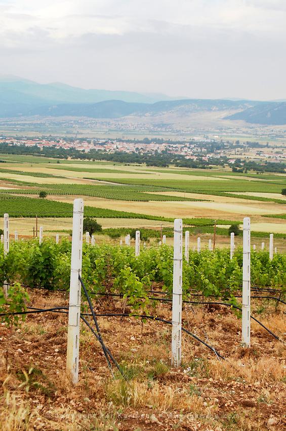 Vineyard. View over Amyndeon. Amyntaion wine cooperative, Amyndeon, Macedonia, Greece