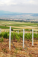 Vineyard. View over Amyndeon. Amyntaion wine cooperative, Amyndeon, Macedonia, Greece