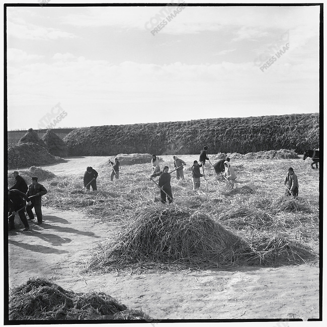 """One of the central tenets of the May 7th Cadre School program was that manual labor was an effective means of erasing elitism and reinstalling socialist values. Here, May 7th """"soldiers"""" thresh grain in the northern part of Heilongjiang; Xinsheng commune, Qing'an County, Heilongjiang Province, November 4, 1969"""