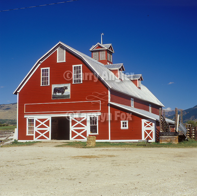 Red and white barn at the Schulz Angus Ranch in Mont., black angus bull painting over the door. Rural Montana.