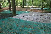 Bucheckern-Ernte zur Gewinnung von Saatgut. Es werden Netze ausgelegt, auf die die Bucheckern herabfallen und eingesammelt werden können. Auffangnetze am Waldboden. Forstsaatgut, Buchenwald, Forstwirtschaft, Waldwirtschaft, Försterei, Förster. Rot-Buche, Rotbuche, Buche, Bucheckern, Buchecker, Buch-Eckern, Fagus sylvatica, Common Beech, European Beech, Fayard, Hêtre commun. Beechnuts, beechnut, seed, seeds, forest management