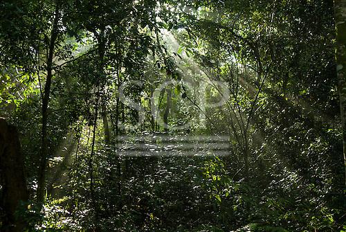 Brazil. Sun rays through thicktransition forest vegetation.