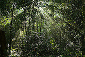 Brazil. Sun rays through thicktransition forest vegetation.
