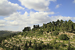 Israel, a view of Jerusalem Forest from Ein Karem