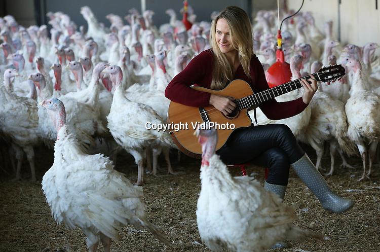 Foto: VidiPhoto<br /> <br /> YSSELSTEYN - De kalkoenen van fokker Ren&eacute; Arts uit het Limburgse Ysselsteyn werden woensdag verrast met een heus kerstconcert. Voordat de dieren op het bord belanden van consumenten, kregen ze van hun baas een concert aangeboden. De bekende  kunstmusicus Rineke de Wit uit Amersfoort speelde met gitaar en hobo diverse bekende nummers voor de duidelijk enthousiaste kalkoenen, die op hun beurt driftig mee begonnen te zingen. De artieste komt zelf uit een agrarisch nest en wil nieuwe idee&euml;n opdoen voor haar muziek in de natuur en het agrarisch bedrijfsleven. Zelf bespeelt ze vijf instrumenten, is ze dirigent en arrangeert ze muziek. Klanken vanuit de natuur wil ze verwerken in haar nieuwe repertoire of inbrengen in al bestaande muziek. Voor Arts is inmiddels duidelijk dat deze muziek de dieren rustig maakt. Minder stress is gezondere dieren, dus beter vlees. Kalkoenenvlees zit sowieso flink in de lift. De consumptie er van neemt flink toe, doordat het vlees bekend staat als mager en gezond. Arts is met een Wintergarten (overdekte vrije uitloopstal) de meest kalkoenvriendelijke fokker van ons land. Hij hoop binnenkort een Beter Leven-ster van de Dierenbescherming in de wacht te slepen.