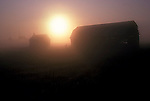 farm buidlings in Early morning mist
