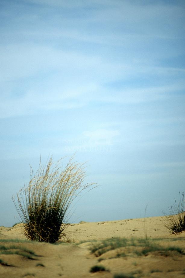 Kalmthoutse heide, zandverstuiving