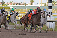HALLANDALE BEACH, FL - DECEMBER 16:   #7 Fear the Cowboy with jockey Javier Castellano on board comes wide passing the field to win the Harlan's Holiday Glll at Gulfstream Park on December 16, 2017 in Hallandale Beach, Florida. (Photo by Liz Lamont/Eclipse Sportswire/Getty Images)