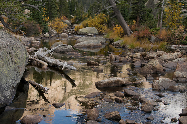 fall color, stream, Glacier Creek, outlet to Mills Lake, trees, forest, abstract, nature, scenic, autumn, afternoon, Rocky Mountain National Park, Colorado, Rocky Mountains, USA