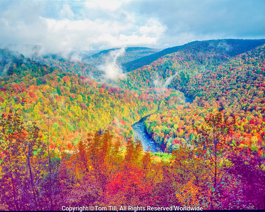 Autumn forest at World's End State Park, Pennsylvania LOyalsock Canyon   Appalachian MOuntains