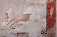Fresco of a hunting scene with bull and other animals, and on the right, the god Mars on a red background, from the back wall of the garden area with benches in a summer triclinium beneath a pergola supported by 4 stucco columns, in the Casa dell Efebo, or House of the Ephebus, Pompeii, Italy. This is a large, sumptuously decorated house probably owned by a rich family, and named after the statue of the Ephebus found here. Pompeii is a Roman town which was destroyed and buried under 4-6 m of volcanic ash in the eruption of Mount Vesuvius in 79 AD. Buildings and artefacts were preserved in the ash and have been excavated and restored. Pompeii is listed as a UNESCO World Heritage Site. Picture by Manuel Cohen