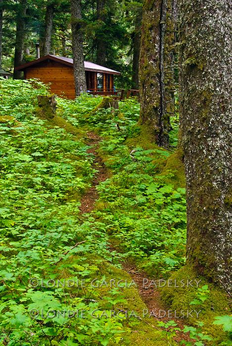 Trail in Sitka Spruce forest leads to public use cabin on Shuyak Island. Shuyak Island State Park, Alaska